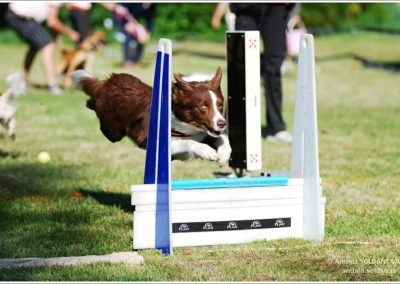 Flyball – pan Jim
